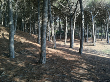 Pine Forest Park